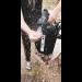 beachbox shower